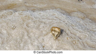 Dead Sea shore with salty beach - Salty beach with a stone...