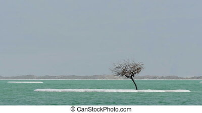 Dead Sea waterscape with salty islets - Dead Sea scene with...