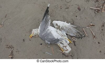 dead seagull - seabird dead on the beach after a storm