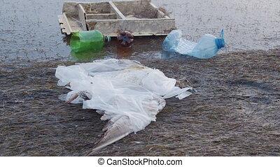 Dead seagull tangled in plastic bags among plastic bottles...