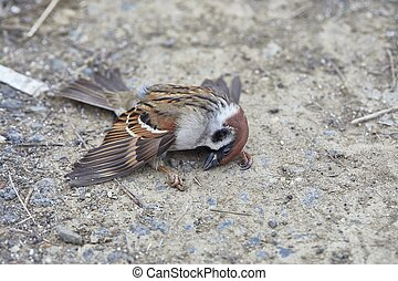 Fallen sparrow in very cold weather