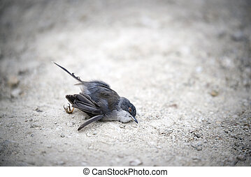 Dead sparrow on the ground.