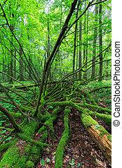 Dead spruce lying moss wrapped