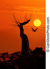 dead tree against sunlight over sky background in sunset with a flighting bird