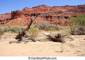 Dead Tree Along Scenic Paria Canyon Trail
