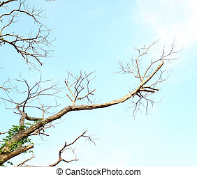 dead tree branch against blue sky background