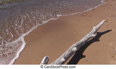 dead  tree branch on sea beach sand