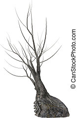 Dead Tree - Dead tree with no leaves on a white background