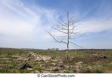 Dead tree in a field - Dead tree on a place of forest fire