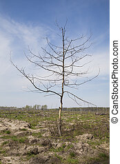 Dead tree in a wasteland - Dead tree on a place of forest...