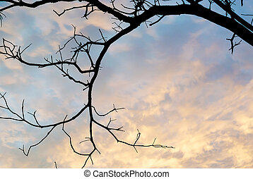 Dead tree in row light