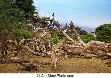 Dead tree in savannah