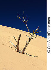 dead tree on the slope of a sand dune. The sky is deep blue.