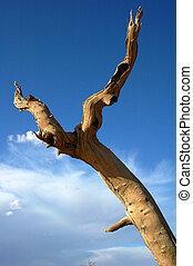 Dead tree in the desert