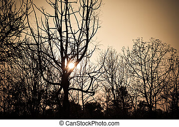 Dead tree in the sunset