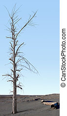 Dead tree in the zone of ecological disaster