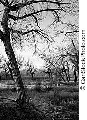 dead trees landscape against a gloomy Wyoming winter sky, converted to black and white