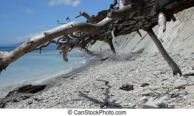 Dead tree on a littered beach