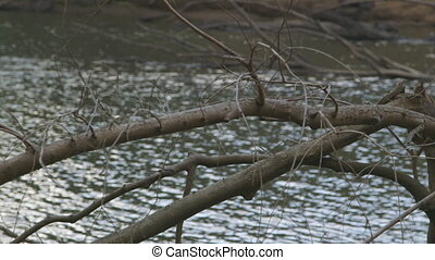 Dead Tree On A River Bank, Qld Island, Australia