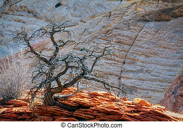 Dead Tree on a Rocky Outcrop in Zion