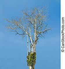 Dead tree on blue sky background