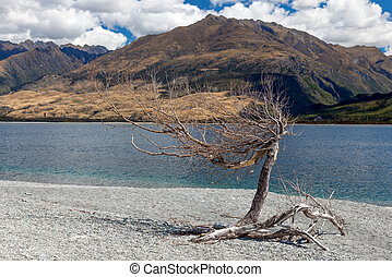 Dead tree on the banks of Lake Wanaka in New Zealand