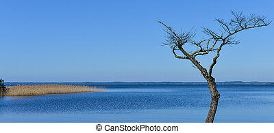 Dead tree on the edge of a lake