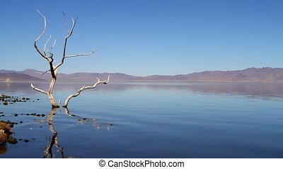 Dead Tree Pyramid Lake Nevada - A surreal view of a natural...