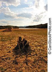 Dead tree root on dried field