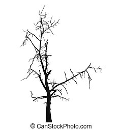 Silhouette old dry tree