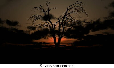 dead tree sunrise
