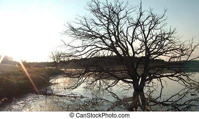 Dead Tree Sunrise