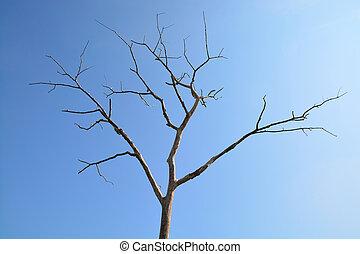 dead tree under Sunlight and blue sky