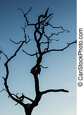Dead tree with sky
