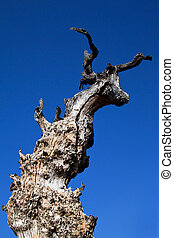 Dead tree with texture and blue sky