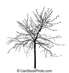 Dead Tree without Leaves. Vector Illustration.