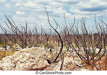 dead trees after the fire