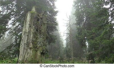 Dead trees are caused by acid rains, sulfur oxides, nitrogen...