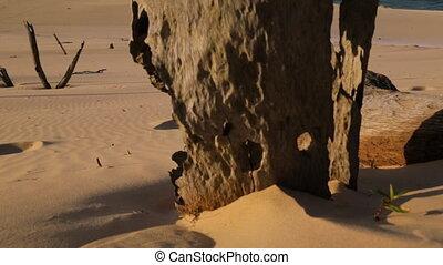 Dead Trees At The Beach, Qld Island, Australia