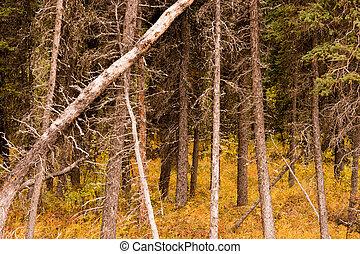 Dead Trees Fall Over Natural Forest Regenertation