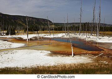 Dead trees, Fountain Paint Pot, Yellowstone National Park
