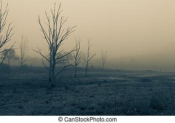 Dead trees in a meadow on a foggy misty morning.