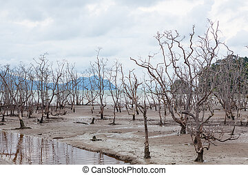 Dead trees in beach at low tide