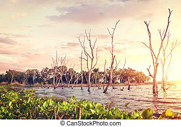 Dead Trees in the forest around a lake with Sunset.