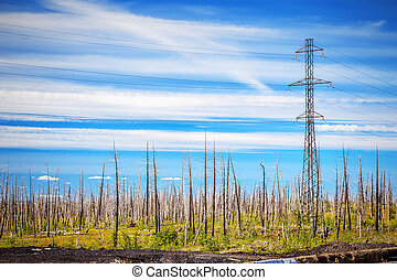 Dead Trees in the forest around a Norilsk