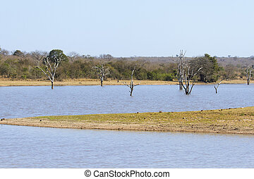 Dead trees in waterhole of game reserve in Africa