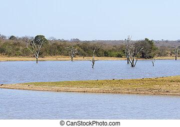 Dead trees in waterhole of game reserve in Africa