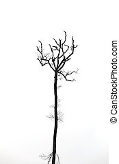 dead trees isolated on the white.