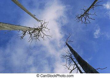 Dead trees look in the sky