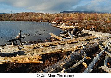 Dead trees on coast